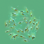 Diatoms Thumb
