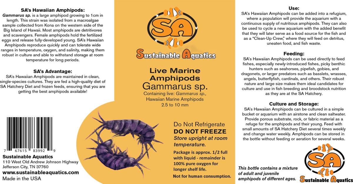 sa s live marine amphipods hawaiian amphipods sustainable aquatics
